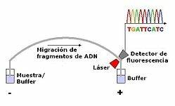 Secuenciación del ADN
