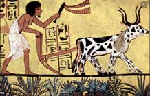 Revolución Agrícola o Neolítica