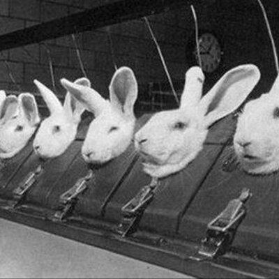 Experimentación con animales timeline