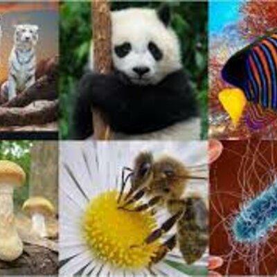 Clasificación de los seres vivos en el tiempo timeline