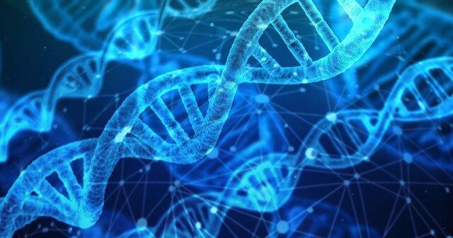 DNA blir for første gang identifisert