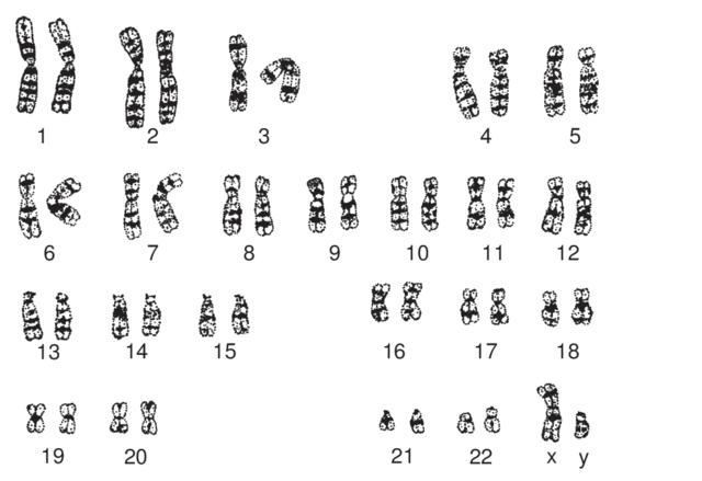 46 kromosomer
