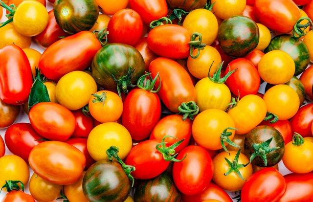 Aprobación del comercio de tomate genéticamente modificado