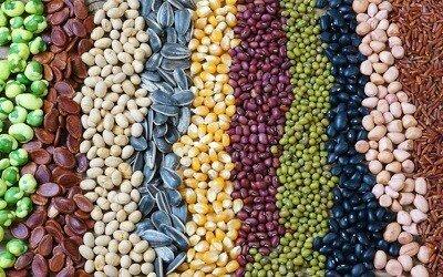 Segundo notable aumento en el uso de semillas transgenicas
