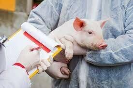 Gripe Suína (H1N1)