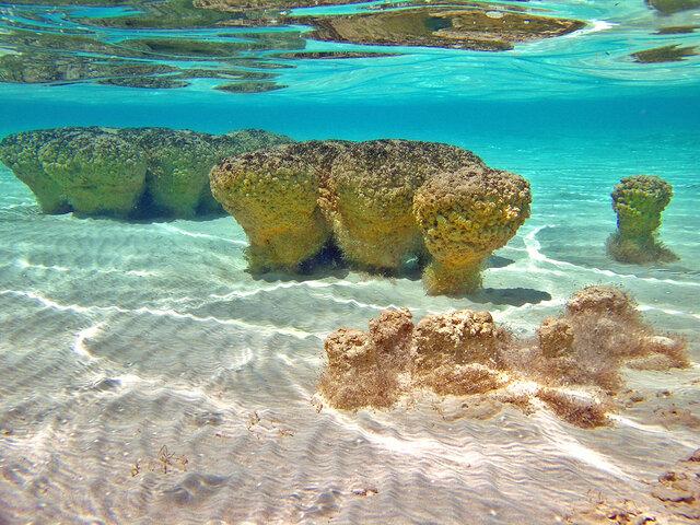 Sedimentary rocks appear