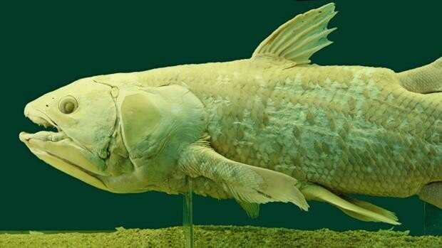 Appearance of the first cartiginous and bony fishes