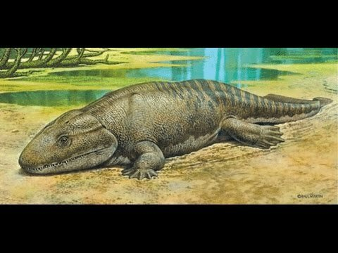 Beginning of the amphibian age