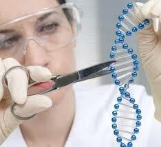 Reacción en cadena de la polimerasa PCR