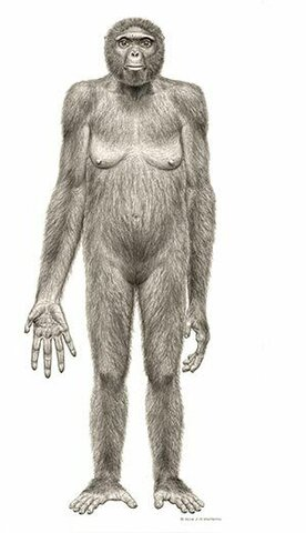 FIRST HOMINIDS 23:53