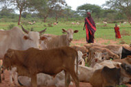 Countries face food shortages