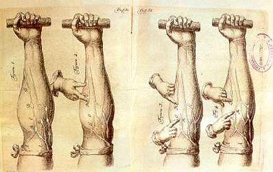 Harvey William (inglés, 1578-1657) - Mecanicista