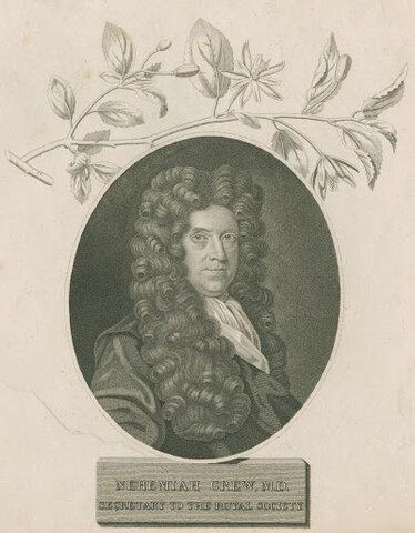 Nehemiah Grew (inglés, 1641-1712)