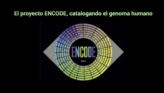 Proyecto ENCODE (Enciclopedia of DNA Elements)