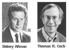 ARN como enzima catalítica
