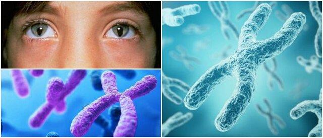 Primer cromosoma humano secuenciado