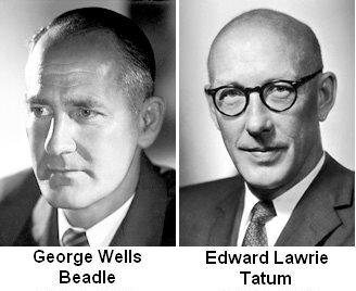 GEORGE BEADLE Y EDWARD TATUM