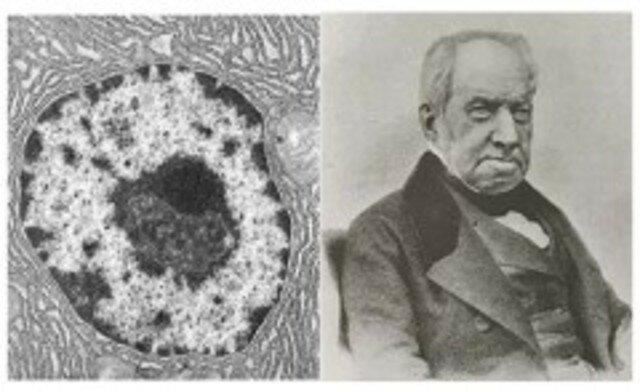 Se identificó el núcleo de la célula.