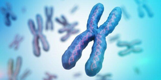 Se identificaron los cromosomas