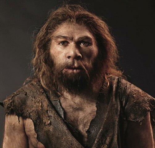 Homo neanderthalensis.
