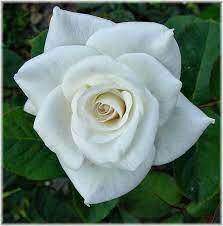 Muerte de mi abuela.