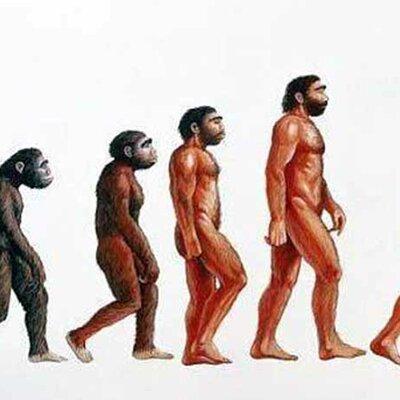 L'evoluzione umana  timeline