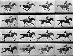 Descomposición del movimiento de Muybridge