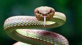 Evolución biológica de la serpiente timeline