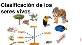 la clasificación de los seres vivos ( María Duarte - 2do Técnica) timeline