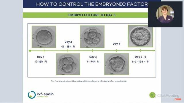 Blastocyst Development: Day 3-5
