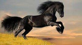 Evolución del caballo. timeline