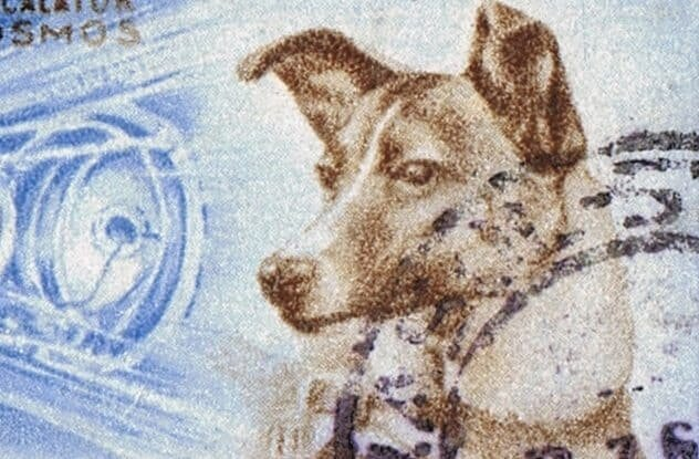 First Animal in Space - Laika