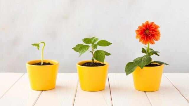 Desarrollo y Expansión De Las Flores