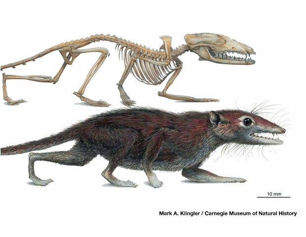 47MA Surgimiento de mamíferos y aves