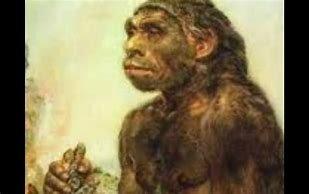 Los Monos Bajan de Los Arboles