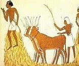 Nacimiento de la Agricultura