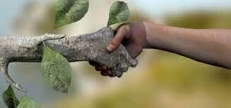 Ley Federal de Responsabilidad Ambiental.