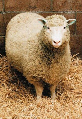 Clonació de l'ovella Dolly