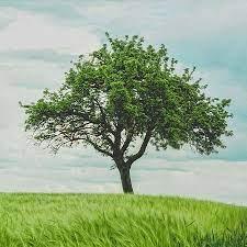 Le bois est le produit le plus exporté du Bas-Canada