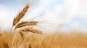 Royaume-Unis adopte les Corn Laws