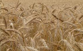 Baisse de production agricole