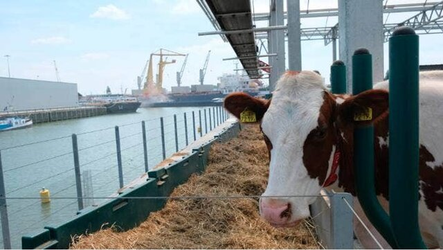 Floating Dutch Dairy Farm - The purpose of the project was to construct a diary farm on a three story floating pontoon moored in the Dutch port city of Rotterdam using waste products from the city to feed the cows.