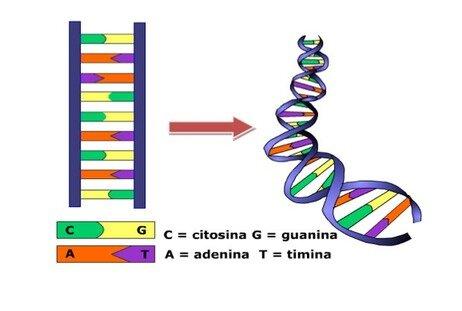 Identificación del orden que siguen los compuestos químicos que forman el ADN