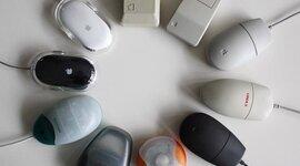 Evolución del ratón timeline