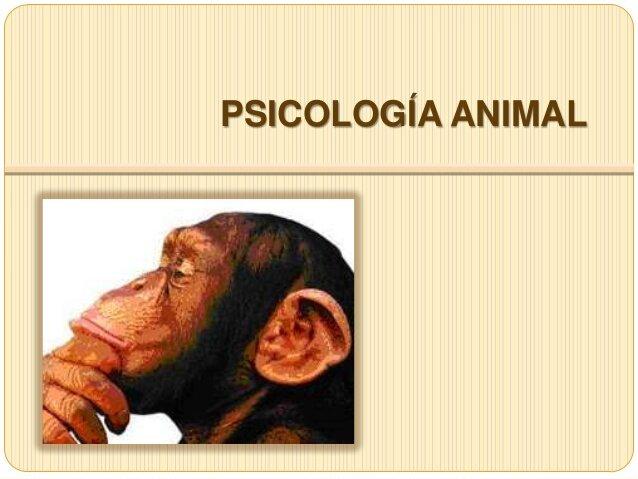 Islas Británicas y La Psicología animal