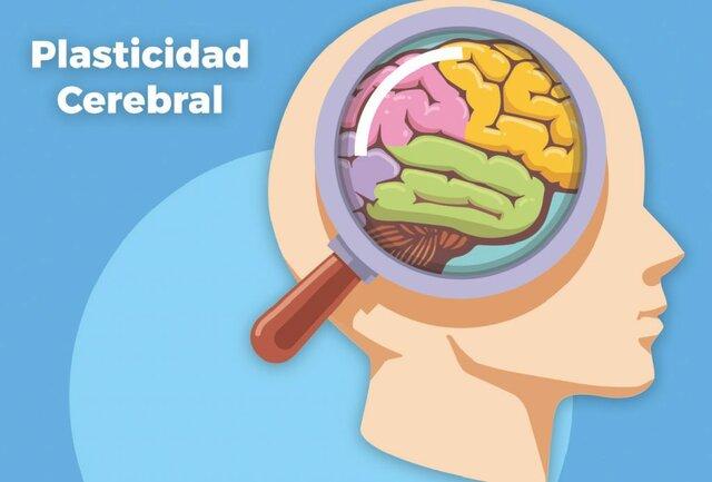 Plasticidad cerebral y el aprendizaje