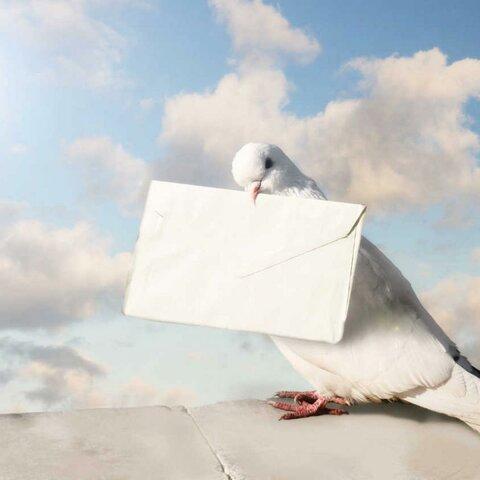 Cartas de papel o palomas mensajeras