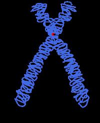 Teoría cromosómica de la herencia. Theodor Boveri y Walter Suttin
