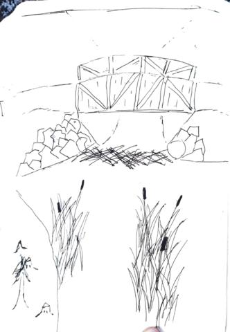 Creeks and Beavers