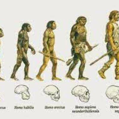 línea evolutiva timeline